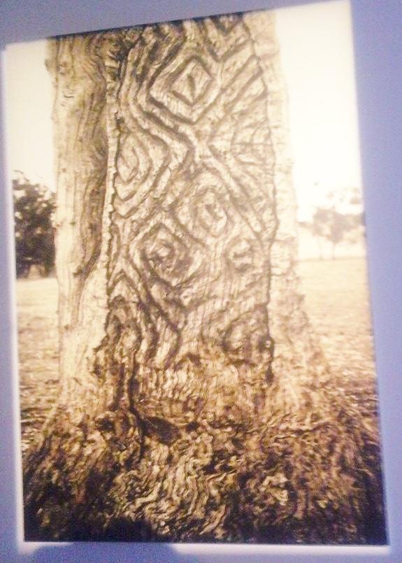 arbre dessins un